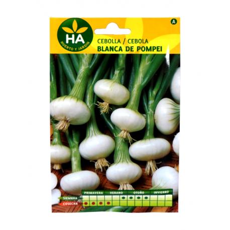 Semillas Cebolla