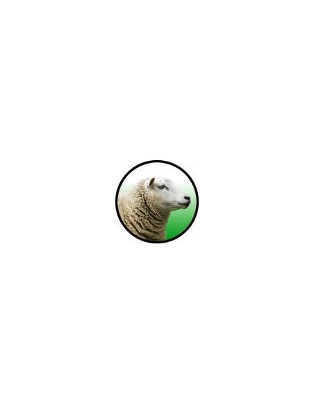 Bebederos Ovejas - Cabras
